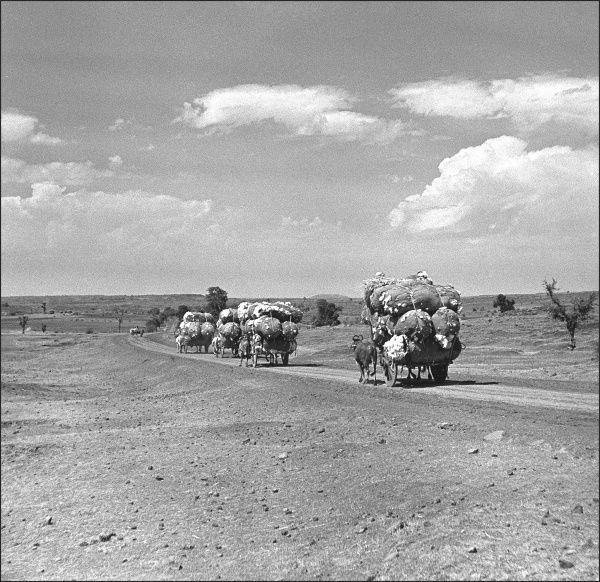 Goods being transported along a country road in Madhya Pradesh, Central India. Photograph by Ralph Ponsonby Watts