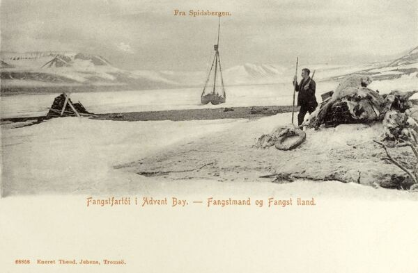 A trapper at work in Advent Bay, Spitsbergen, Norway Date: circa 1907