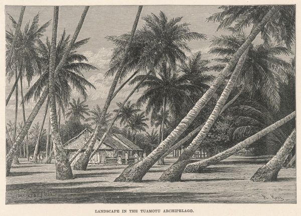 Trees affected by the prevailing wind in Tuamotu archipelago, French Polynesia