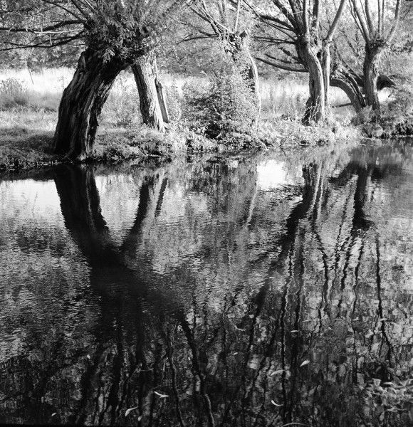 Trees reflected in the still water of a pond or slow-moving river or stream. Photograph by Norman Synge Waller Budd