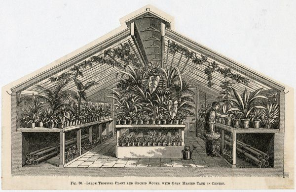 Cross-section view of a tropical plant and orchid house