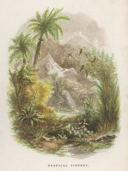 A tropical vignette complete with parrots in the tree-tops, mountainous terrain and lush ferns and palms (tree ferns ?)
