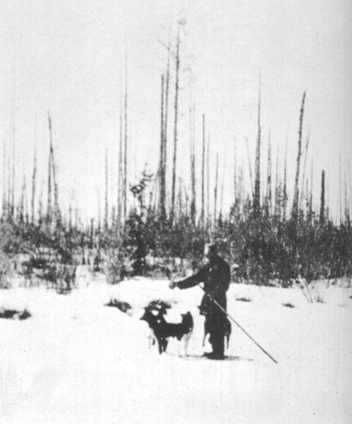 Kulik stands near a section of upright charred trees, Southern swamp, Tunguska