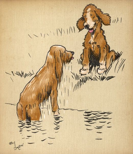 Twin puppy Snip emerges wet from the river, only to be sniggered at by his dry brother Snap