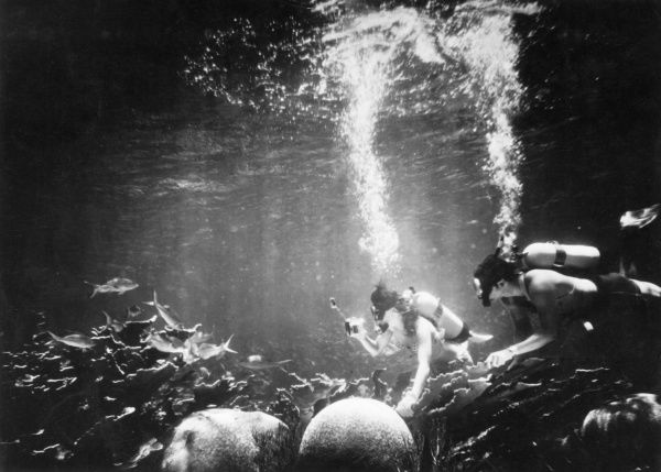 Diving chemists taking water samples for analysis at the Tektite II underwater habitat, which involved an all-female team of aquanauts, 50 feet off St. Johns, U.S. Virgin Islands Date: 1970