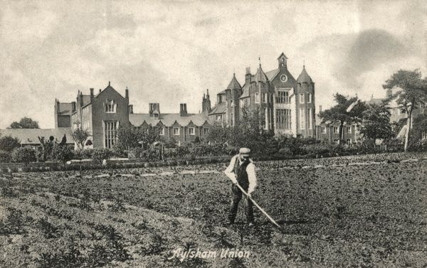 An inmate hoes vegetables in the grounds of Aylsham Union workhouse, Norfolk. The workhouse, designed by William J Donthorn, was erected in 1848-9. It later became St Michael's Hospital