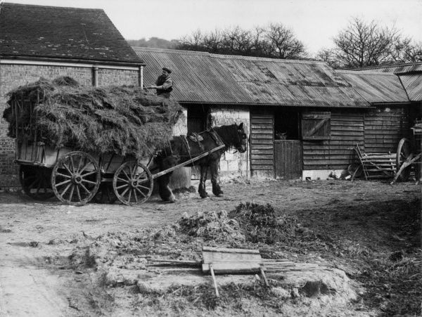 Unloading a cart load of hay on a farm in Kent, England. Date: 1930s