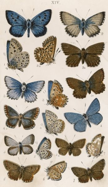 Various butterflies