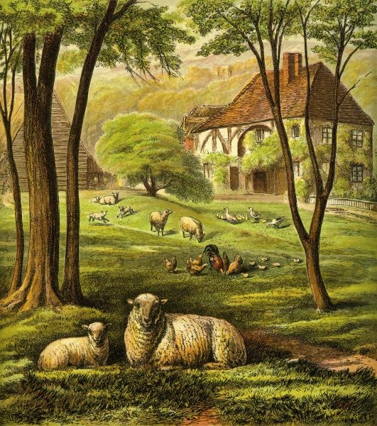 Victorian Farmyard (The farmyard). A general scene the farm with sheep and poultry. Unattributed illustrator Date: circa 1870