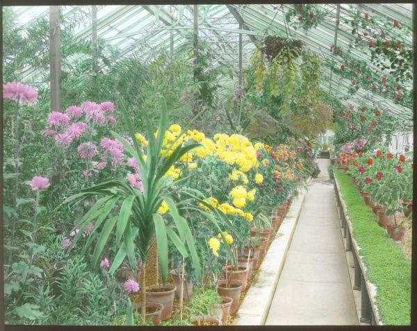 View inside a greenhouse at Kew Gardens, West London, with an array of plants and flowers of different colours
