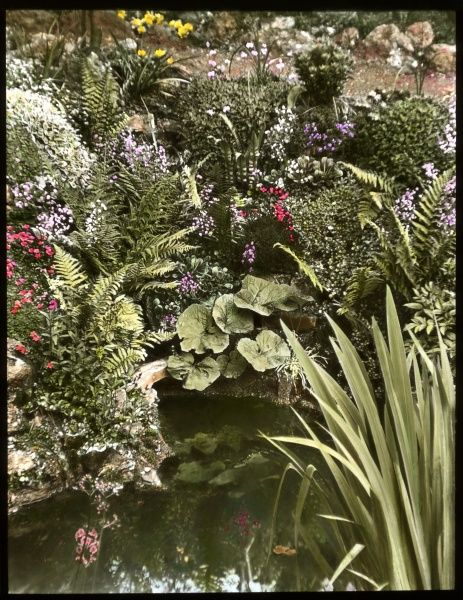 A view of Reginald Malby's garden, showing a pond surrounded by plants and flowers