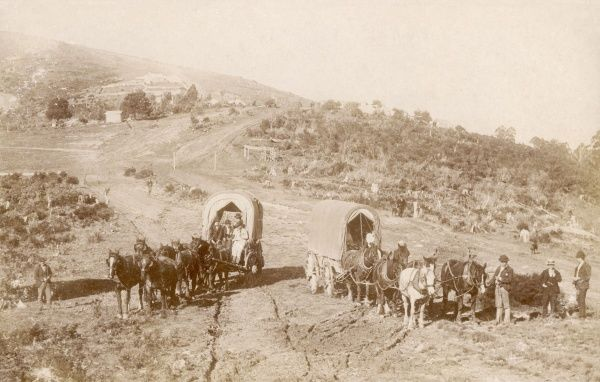 Horse drawn wagons and horses on a farm in Australia