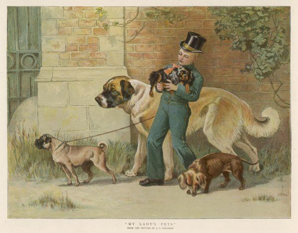 'MY LADY'S PET' - a liveried servant boy walks the family dogs