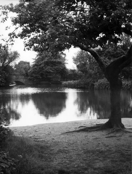 The small lake on Wandsworth Common, south London. Date: 1950s