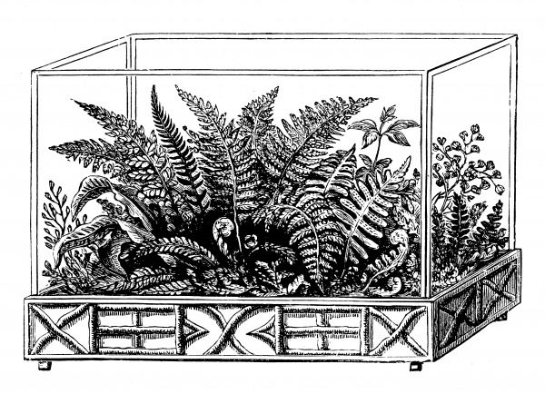 A Wardian case containing ferns