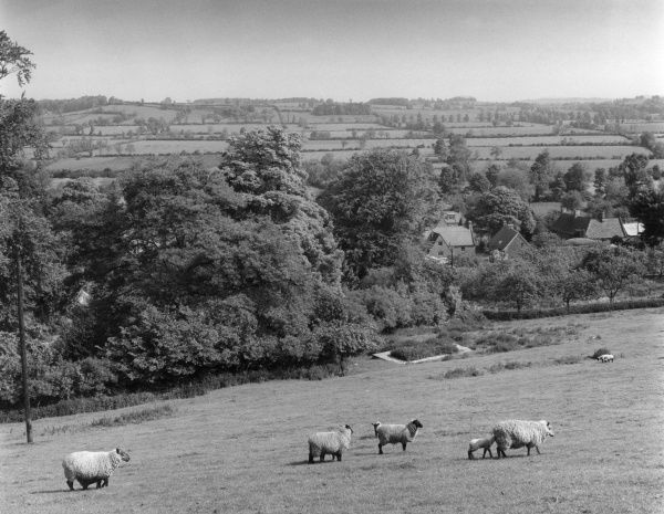 A pastoral scene, from the slopes of Deddington Hill, Warwickshire, England, overlooking part of the village of Warmington. Date: early 1960s