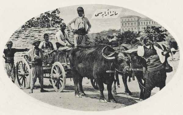 Two Water Buffalo pull a wagon - Constantinople, Turkey