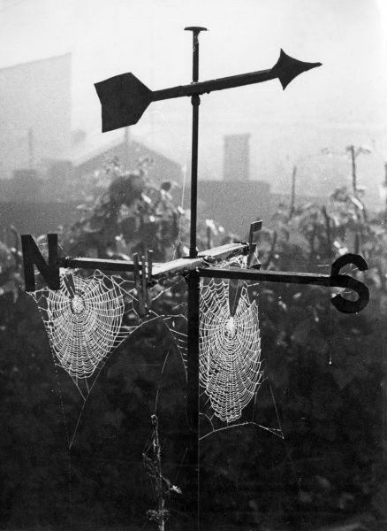 Large spider's webs are caught in the sunshine, hanging from a weathervane. Date: 1950s