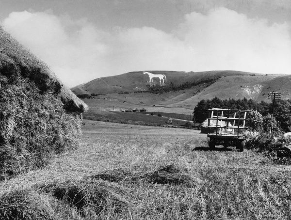 On the Downs at Westbury, Wilts is this Great White Horse commemorating the defeat of the Danes by Alfred at the Battle of Ethandune in 878