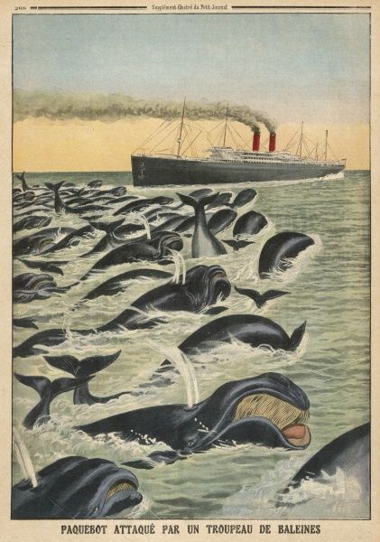 Sixty whales attack a German liner 'Prinz Sigismund' in the Atlantic, but it escapes them