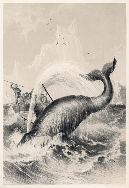 Whaling during Sir John Ross's first Arctic expedition in Melville Bay