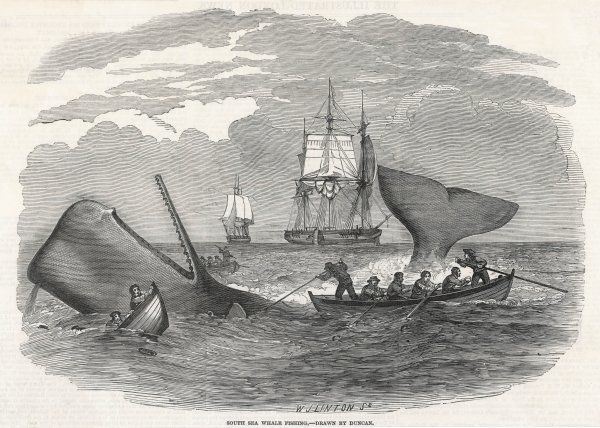 Whaling in the South Seas