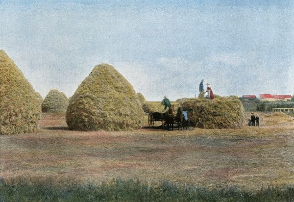 Stacking in a Manitoba wheat field Date: 1890s