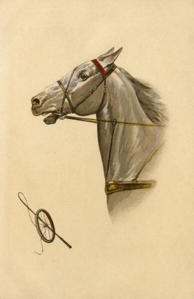 A white horse in full flow wearing a distinctive 'running' martingale - used to control the horse's head height, and to prevent the horse from throwing its head so high that the rider gets hit in the face by the horse's poll or upper neck