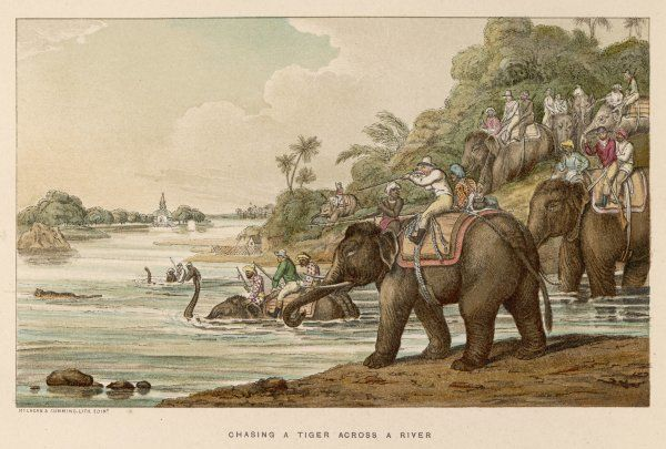 CHASING A TIGER ACROSS A RIVER Shooting at a swimming tiger from the back of an elephant