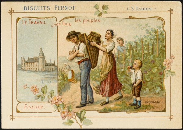 France - La vendange, harvesting grapes to be made into wine