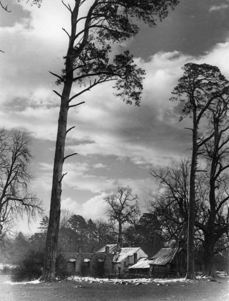 The approaching snow storm - a winter study of the Keeper's cottage, among the trees of Hatfield Forest, Essex, England. Date: 1930s