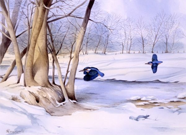 A snow-covered winter landscape with two kingfishers flying low near a clump of trees