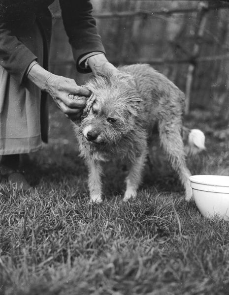 A patient dog lets a woman wipe its face and ears clean with a flannel and bowl of water
