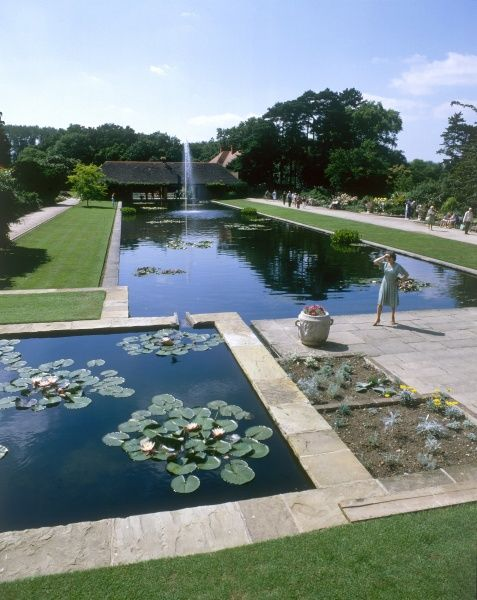 The fountain and water lilies on the lake at Wisley gardens, Surrey, England. Date: 1981