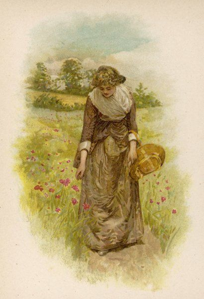 A young woman walking in an English meadow stoops to pick red field poppies
