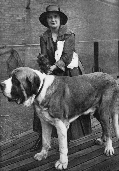 Woman with a st bernard and Yorkshire terrier at a dog show, Wonderful Tiny the yorkshire terrier weighs 10 ounces while Boy Blue the st bernard weighs 250 pounds Date: 19th-20th century