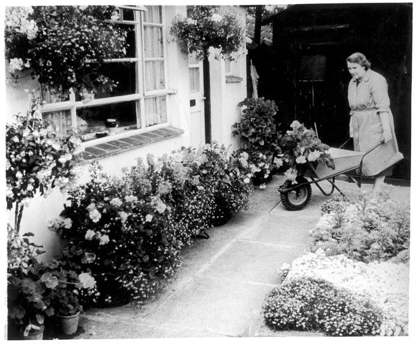 A woman gardening with her wheelbarrow in a very well- kept garden full of roses, hanging baskets and other flower borders