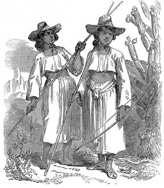 Illustration showing some native American Indian women, of the Papagos tribe, with bows and arrows, wearing wide brimmed hats, cropped tops and skirts