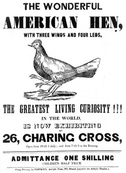 The wonderful American hen with three wings and four legs. The greatest living curiosity in the world, as exhibited at 26 Charing Cross Road, London