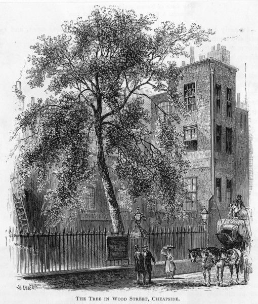 The famous tree in Wood Street, Cheapside