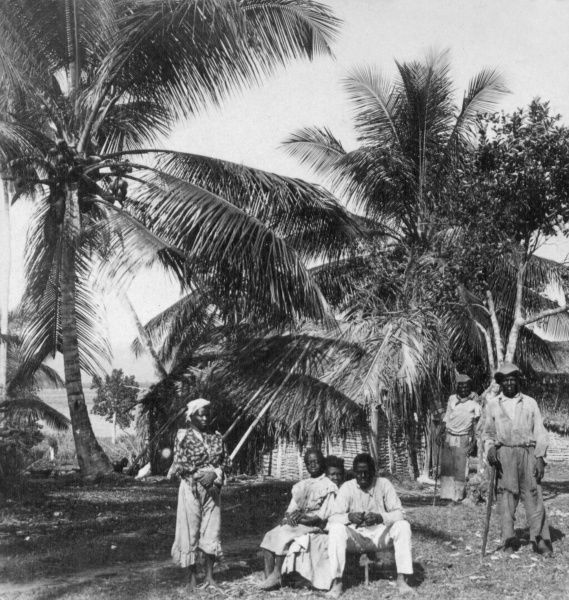 A group of workers in a palm grove, Jamaica