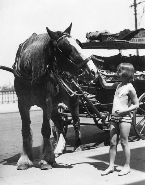 A little girl in a bathing costume feeds a working horse at the seaside, probably Ramsgate or Margate, Kent, England. Date: early 1930s