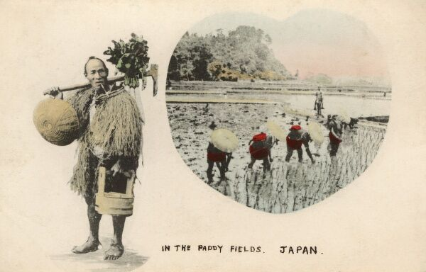 Working the paddy fields - Japan Date: circa 1910