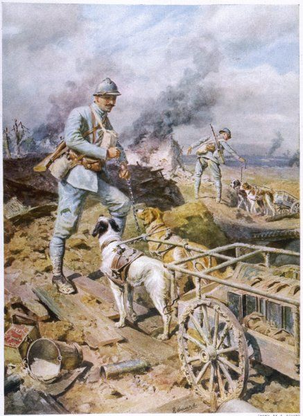 The French army use dogs to haul supplies to their trench positions