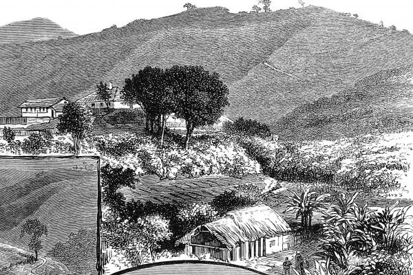 Scenic engraving of the Coffee Estate in the Malabar district of Madras, where gold was found and mined between 1876-1886