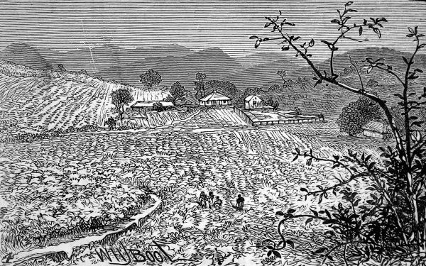 Engraving of the Richmond estate and the hills on which the coffee was grown, workers in the fields in the foreground