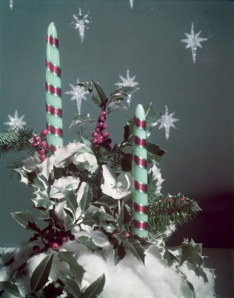 Festive Xmas decoration, possibly a table setting, consisting of Holly berries, a Christmas rose, pine needles, cottonwool & green & red striped candles