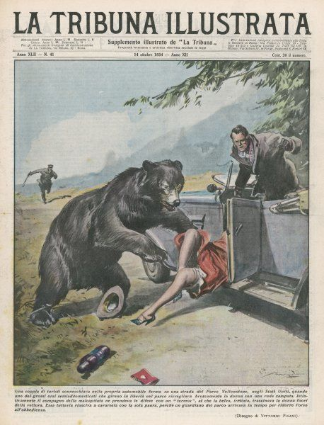 In Yellowstone, a bear pats a woman in a car, but her friend gets angry, so the bear starts to drag her out of the car... until the park warden stops him