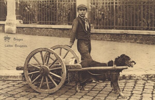 A young boy with his milk dog cart - Bruges, Belgium Date: circa 1910s