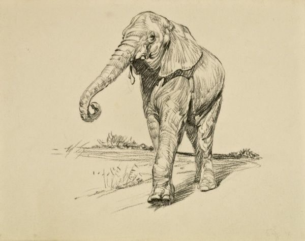 Pastel drawing of a young elephant at a zoo by Raymond Sheppard